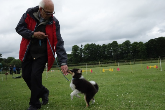 Roy doing heelwork with obedience trainer Peter